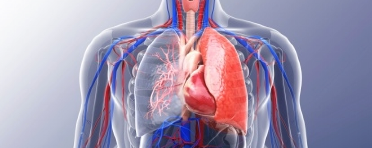 Cardiovascular and Respiratory Sciences